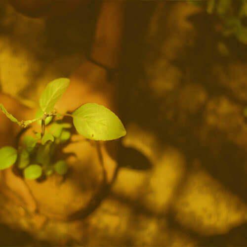vogelwild-ehrensache_baum-pflanzen
